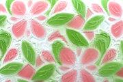 プリムラ 「ル・プレリーギンザ」 花柄 コーラルピンク